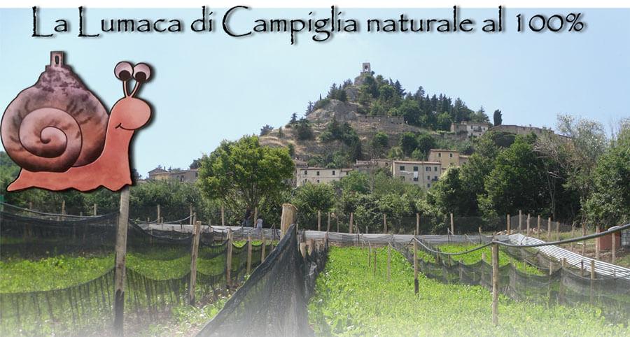 www.lalumacadicampiglia.it